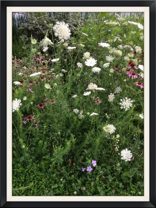 Flowers Walking Meditation